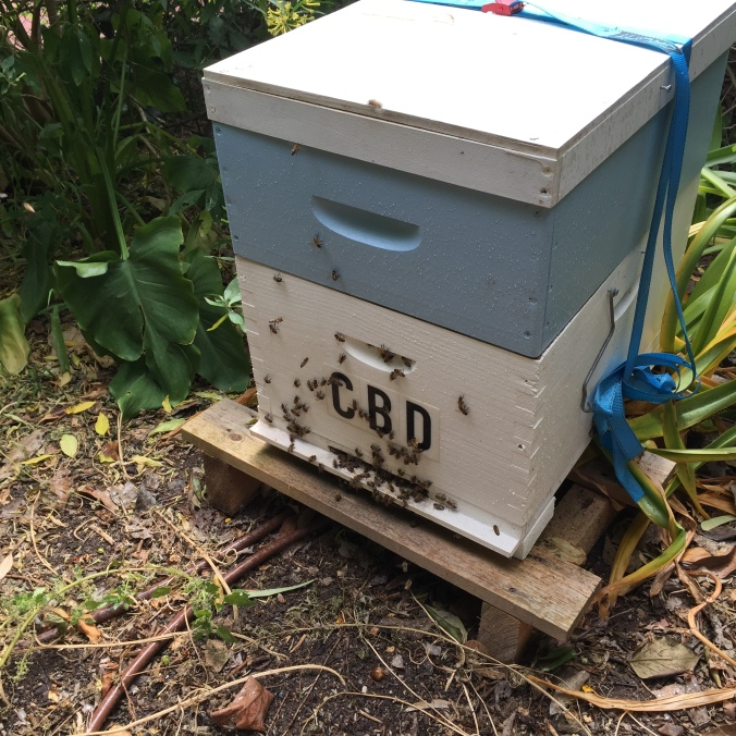 The beehive and in a month I should have my first home grown honey